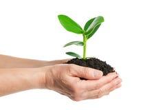Plant tree Royalty Free Stock Photo