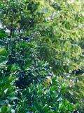Plant, Tree, Leaf, Vegetation royalty free stock photo