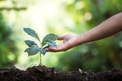 Plant a tree natural background Plant Coffee seedlings in nature green fresh Stock Photo