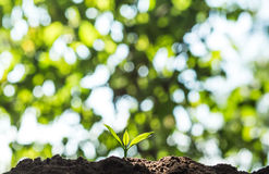 Plant a tree in nature Royalty Free Stock Photography