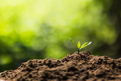 Plant a tree in nature Royalty Free Stock Photos