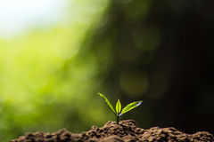 Plant a tree in nature Royalty Free Stock Photo