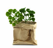 Plant tree in paper pot, Green environment concept. Stock Photos