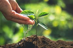 Plant a tree passion fruit Sapling in nature light and blackground. Green Stock Photos