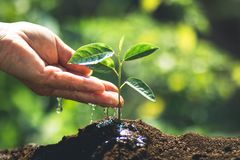 Plant a tree passion fruit Sapling in nature light and blackground. Green Stock Image