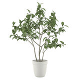Plant tree in the pot isolated vector illustration