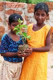 Plant a tree, save environment royalty free stock image