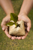 Plant this tree seed stock photography