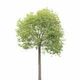 Plant tree Stock Photo