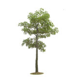 Plant tree Royalty Free Stock Images