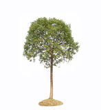 Plant tree Royalty Free Stock Photo