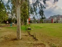 Plant trees field environment. Campus Plant trees field environment university college save Royalty Free Stock Images