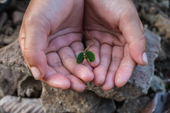Plant trees to save the world. Stock Photos