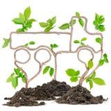 Plant truck Stock Image