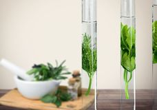 Plant in tube stock images