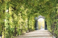Plant Tunnel. Beautiful green tunnel in Schönbrunn garden, Vienna Stock Photo