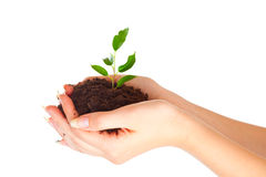 Plant in two hands Stock Photo