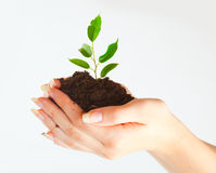 Plant in two hands Royalty Free Stock Image