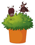A plant with two playful cockroaches Stock Images