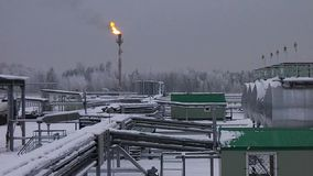 Plant under snow in the winter with a gas flame. Plant winter under the snow in the northern region with a gas flame stock video