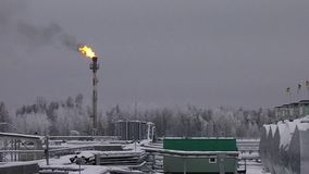 Plant under snow in the winter with a gas flame. Plant winter under the snow in the northern region with a gas flame stock footage