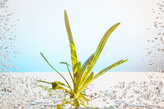 Plant under the water Royalty Free Stock Photo