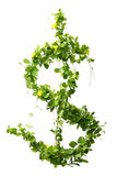 Plant  us dollar Stock Photography