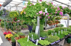 Plant varieties for sale. Different types of plants and flower pots for sale royalty free stock photos