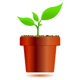 Plant in a vase. Plant growing in a vase over white background Royalty Free Stock Photography