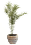 Plant in vase Stock Photos