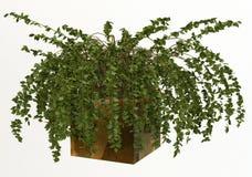 Plant in vase Stock Image
