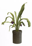 Plant in vase on isolated background Stock Images