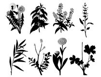 Plant vector Royalty Free Stock Images