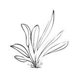 Plant. Vector illustration leaves new plants in bloom Stock Photos