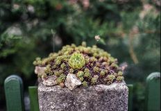 Plant, Vegetation, Flora, Houseplant royalty free stock photos