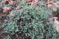 Plant, Vegetation, Flora, Subshrub royalty free stock image