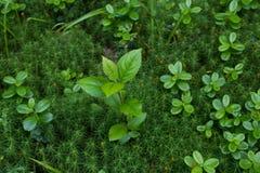Plant, Vegetation, Leaf, Flora