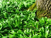 Plant, Vegetation, Leaf, Grass Stock Photography