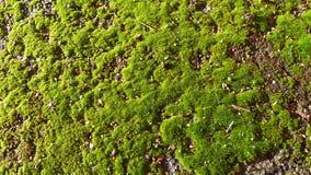 Plant, Vegetation, Moss, Non Vascular Land Plant royalty free stock photo