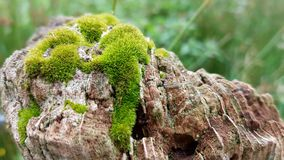 Plant, Vegetation, Non Vascular Land Plant, Moss royalty free stock photography