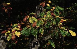 Plant, Vegetation, Tree, Leaf royalty free stock image