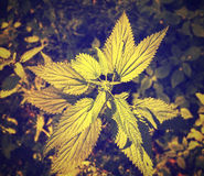 Plant vintage photo. Royalty Free Stock Photography