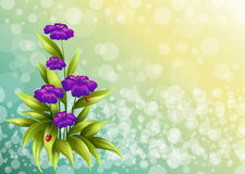 A plant with violet flowers Stock Images