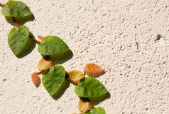 Plant on the wall 1 Royalty Free Stock Photo