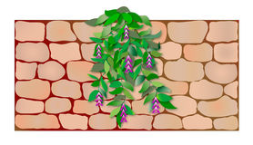 Plant on the wall Stock Photography