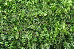 Plant wall Stock Images