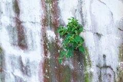 Plant on wall Royalty Free Stock Images