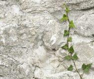 Plant on a wall stock photos