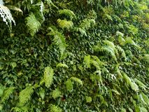 Plant wall indoors green Relaxation. Indoor plant wall with green colors Royalty Free Stock Images