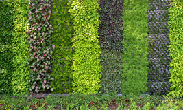Plant wall Royalty Free Stock Images